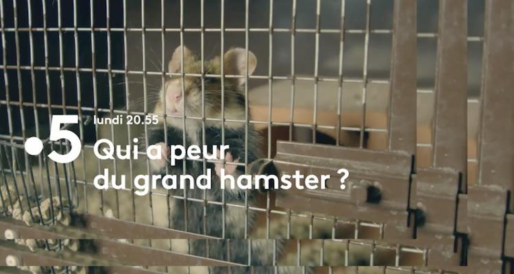 « Qui a peur du grand hamster ? »
